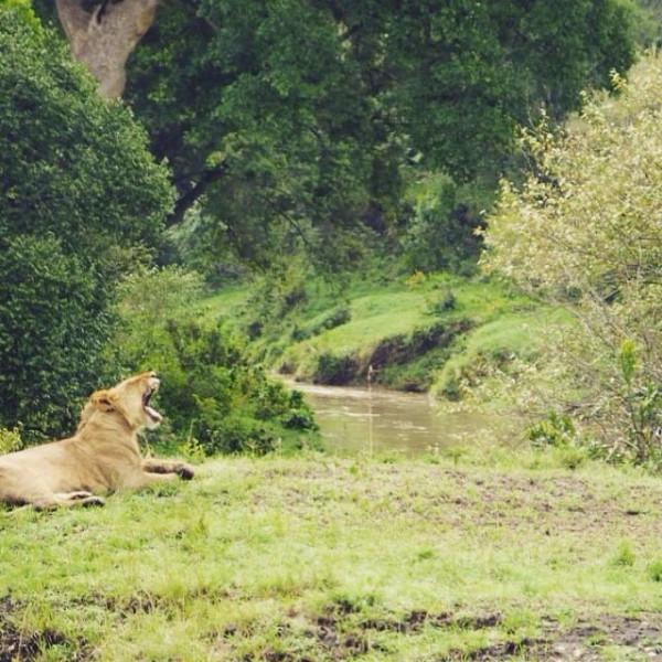 3 Day Masai Mara Paradise Program