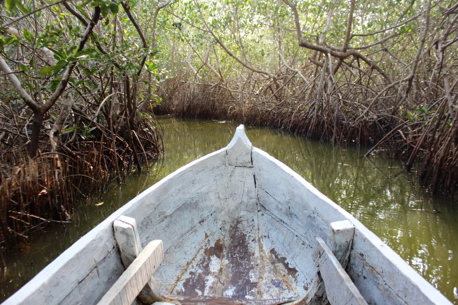 Full-day tour to La Boquilla, Mangroves
