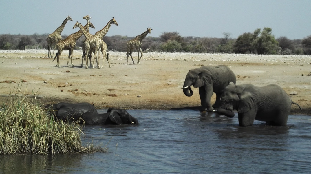 Epic Etosha National Park & Swakopmund - 5 Days