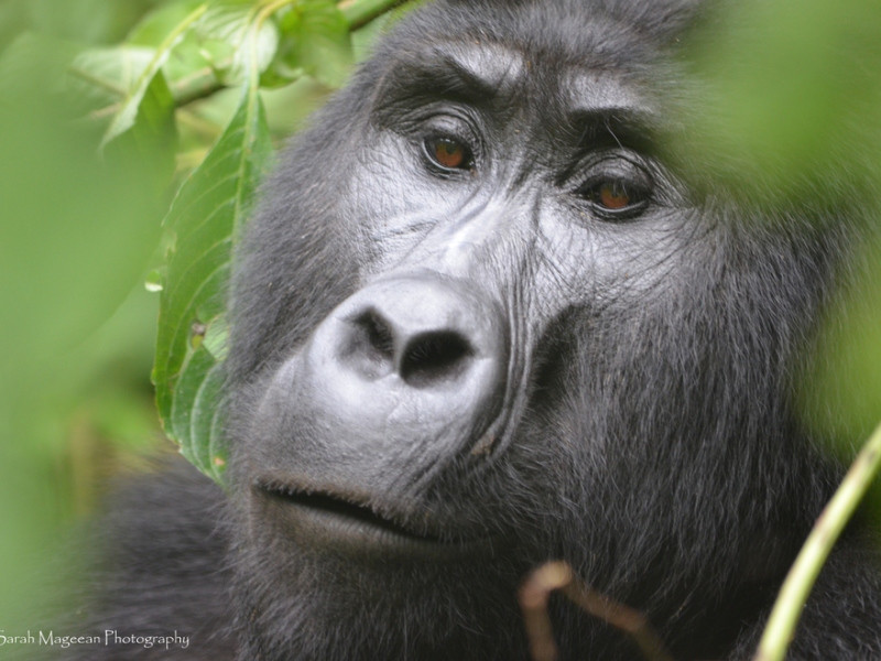 7 DAY GORILLAS AND WILDLIFE