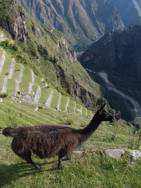 Trip to Machu Picchu Sanctuary