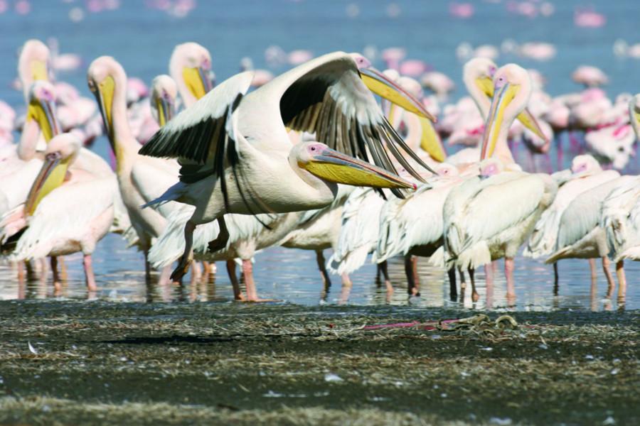 Day 1: Nairobi/ Lake Nakuru