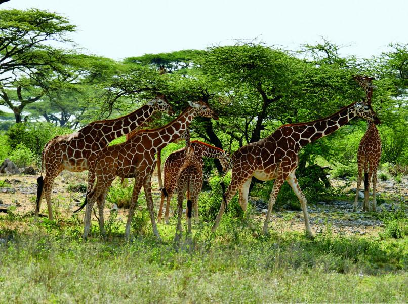 Day 4: Maasai Mara / Nairobi / Depart