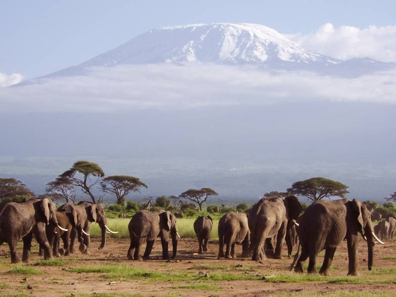 3-Day Jumbo Trail Safari