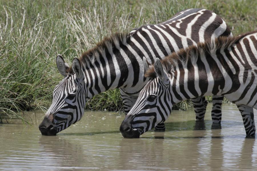 Amboseli / Lake Nakuru