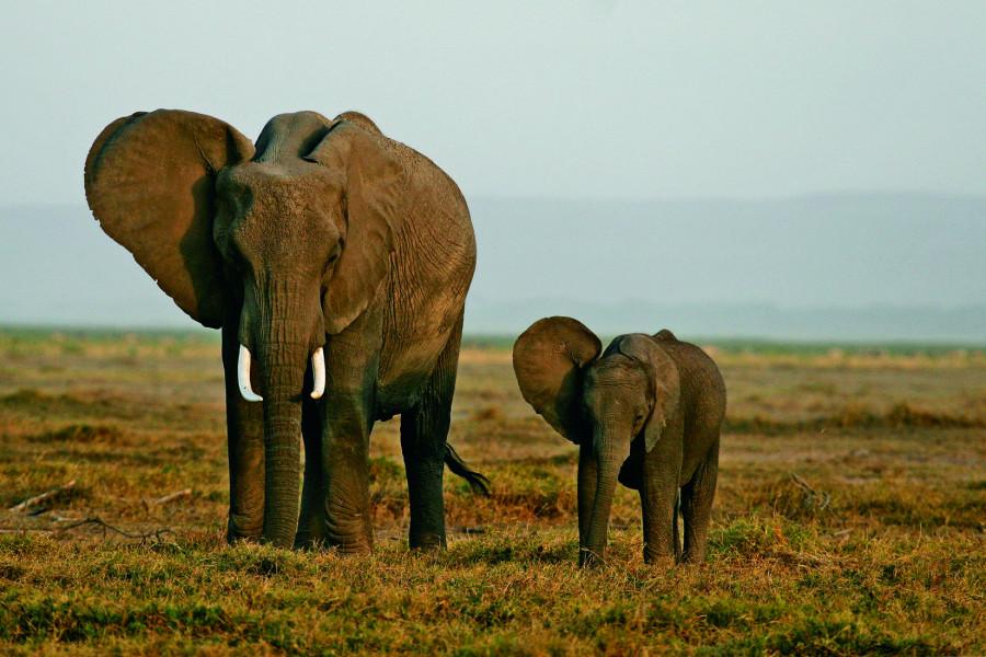 Maasai Mara/ Nairobi/ Depart