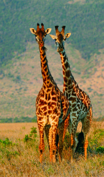 6-Day Sights and Sounds of Africa Safari