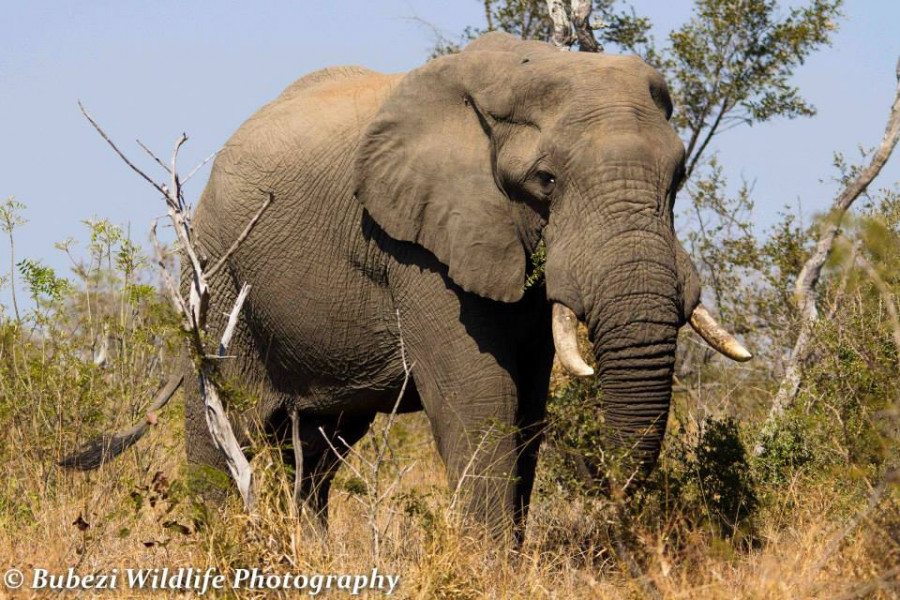 6-Day Family Panoramic, Animal Interaction & Kruger Park