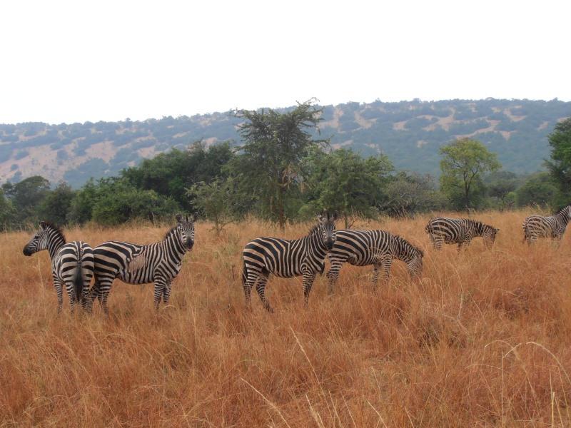 14 DAY RWANDA GRAND TOUR
