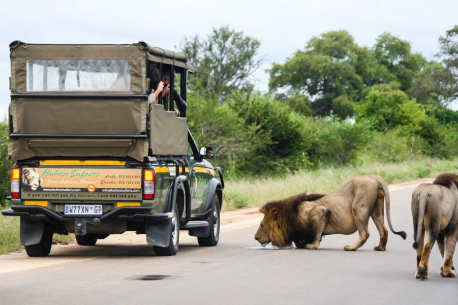 3-Day Budget Kruger Safari