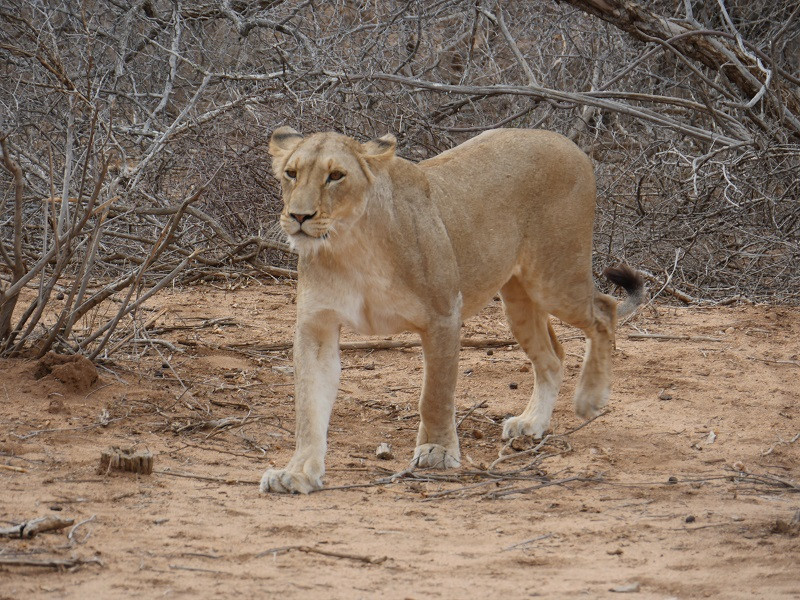 12 Days Camping Kruger and Victoria Falls