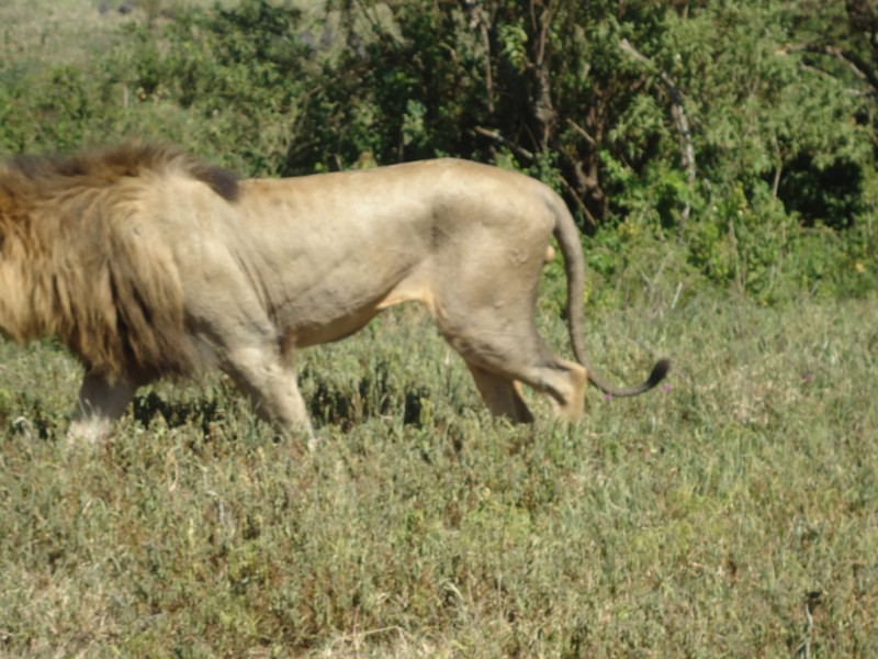 Best 3  Days Maasai  Mara  Joining Migration   Safari