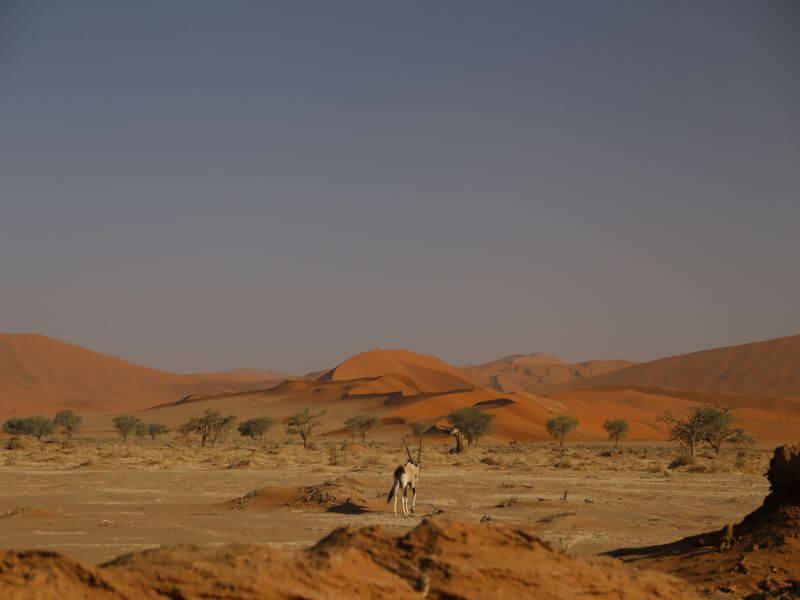 Orange Dunes of Namibia
