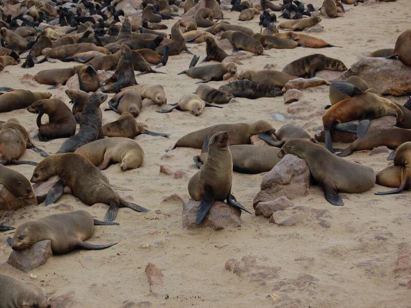 Skeleton Coast - Khorixas