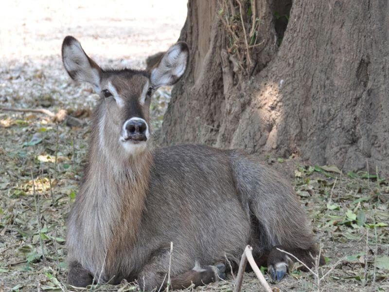 Bulawayo - Hwange