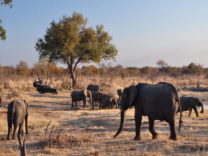 Great Zimbabwe Tour
