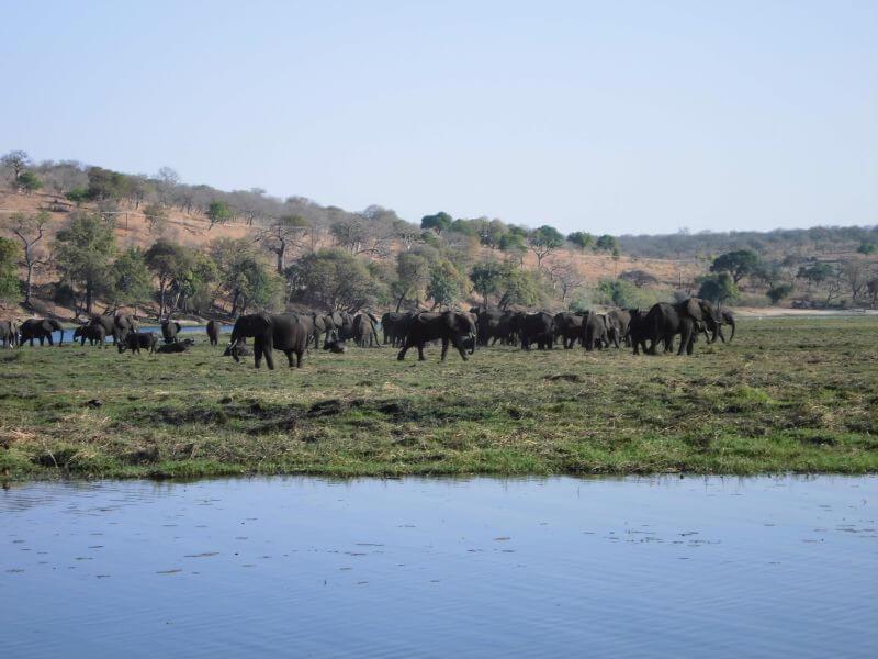 Victoria Falls - Chobe