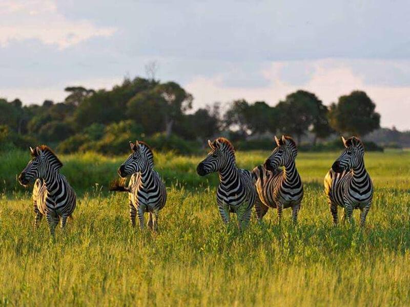 T6: Victoria Falls & Zimbabwe Safari