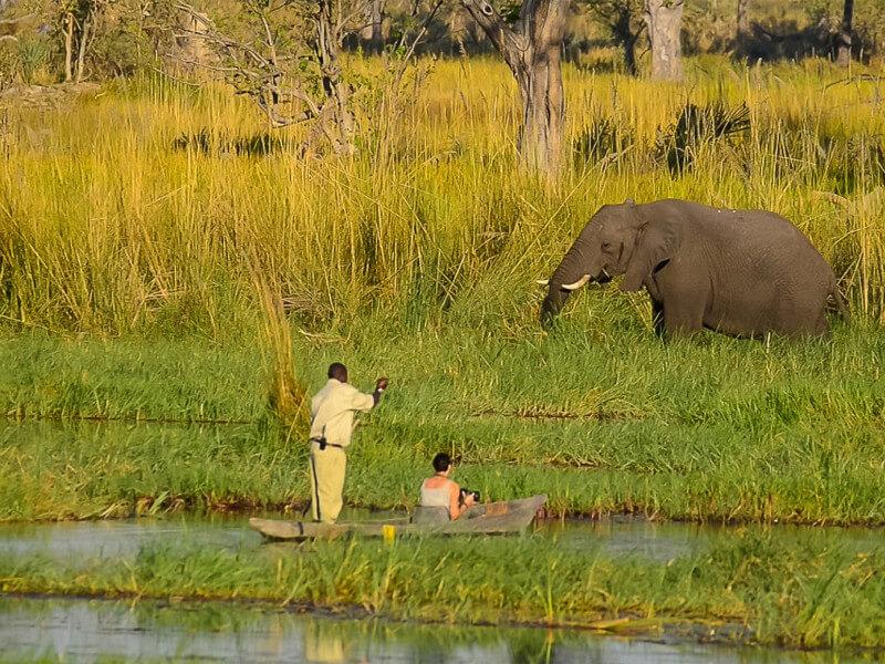 T5: Victoria Falls & Botswana Safari