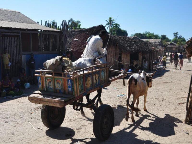 Madagascar - Across Mikea Land