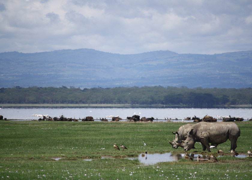 Lake Naivasha - Lake Nakuru