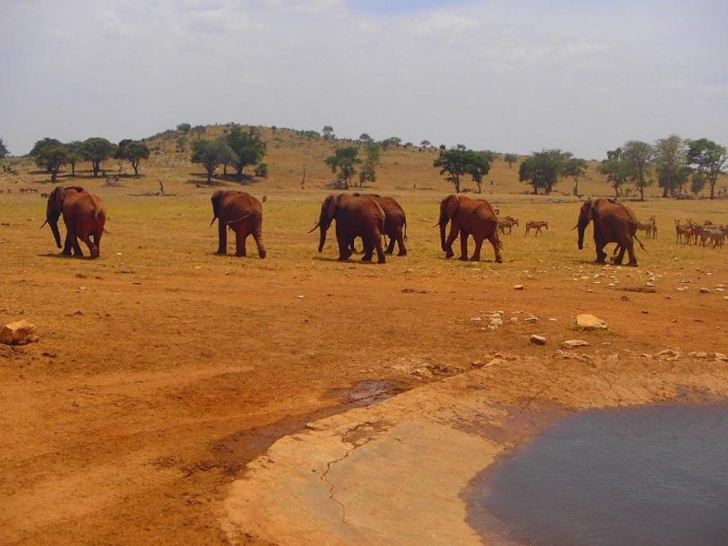 4 Days Tsavo west  Amboseli Tsavo East