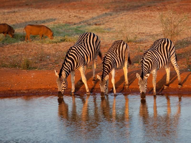 5 Days Samburu, Sweetwaters and Lake Nakurutional park