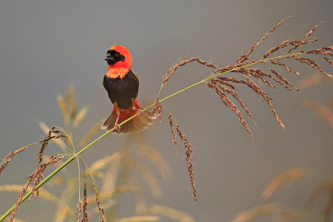 BIRDS & WILDLIFE / SIMBA LODGES