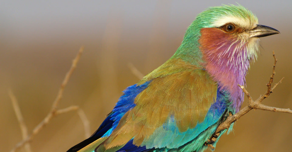 BIRDS WATCHING & GREAT MIGRATION SAFARI