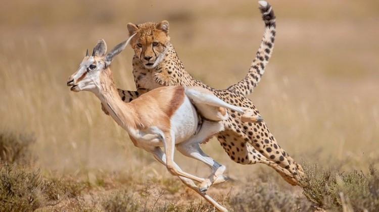 Central Serengeti National Park