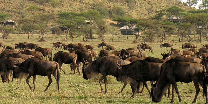 Transfer to Serengeti