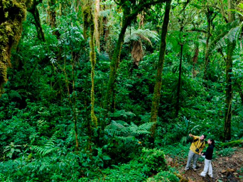 Costa Rica with Corcovado, 13 days