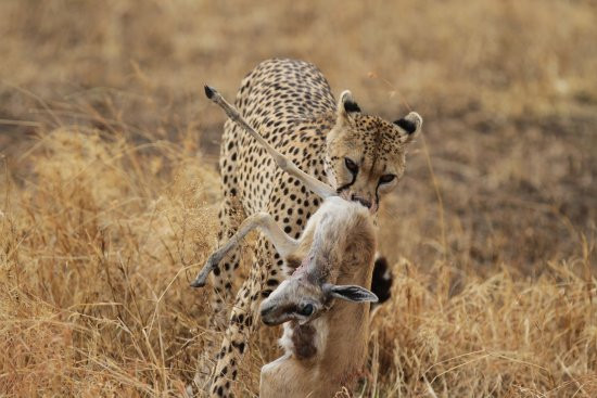 Tarangire to Serengeti National Park
