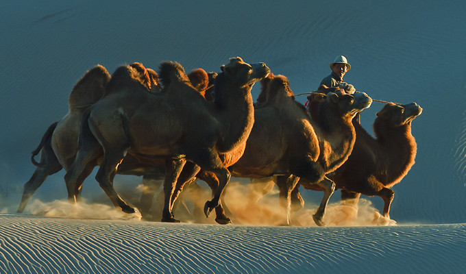Camel Riding Tour