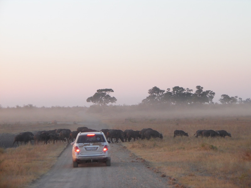 Cradle of Humankind & Northern Safari | Wildlife & African Cultural Heritage