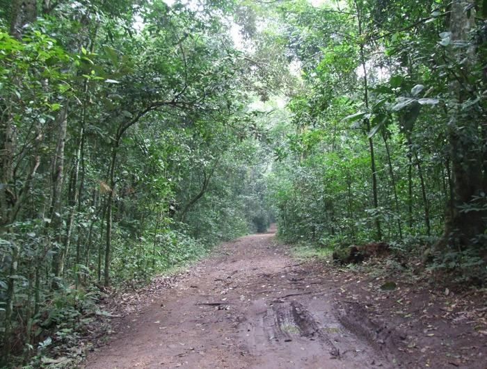 15 days 14 nights Bird watching Gorilla and chimpanzee trekking safari in Uganda