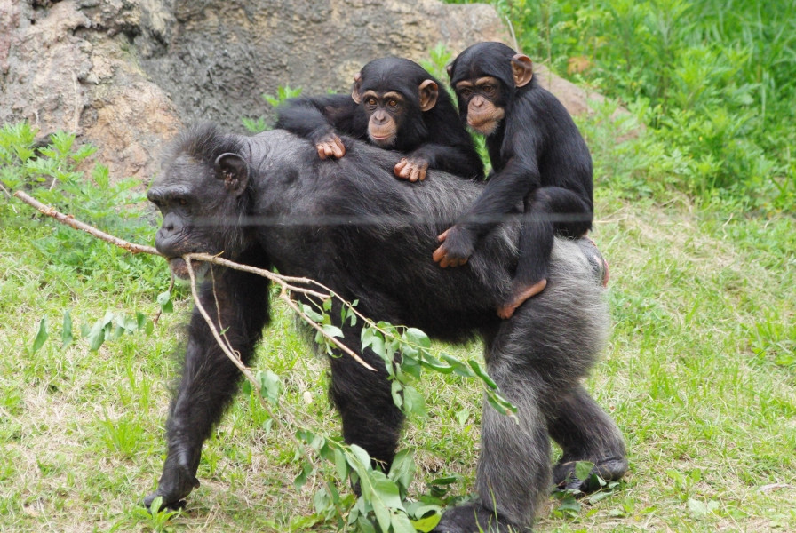 15 days 14 nights Bird watching Gorilla and chimpanzee trekking safari in Uganda