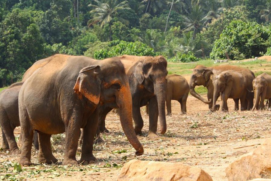 Sri Lanka Highlights 10 Days