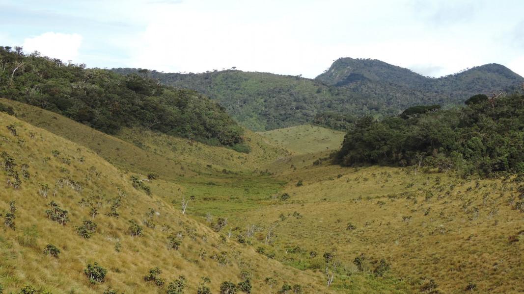 Tea plantation & lands caps