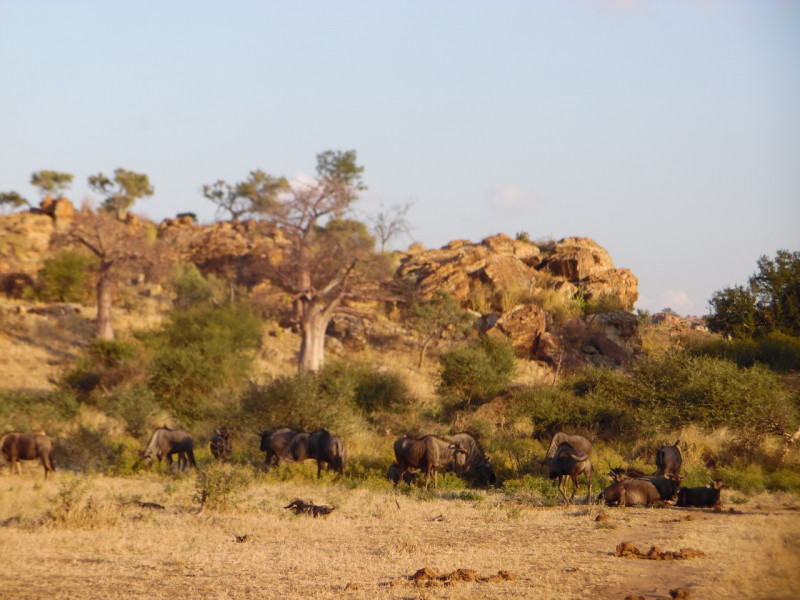 Mapungubwe NP | Culture & Wilderness