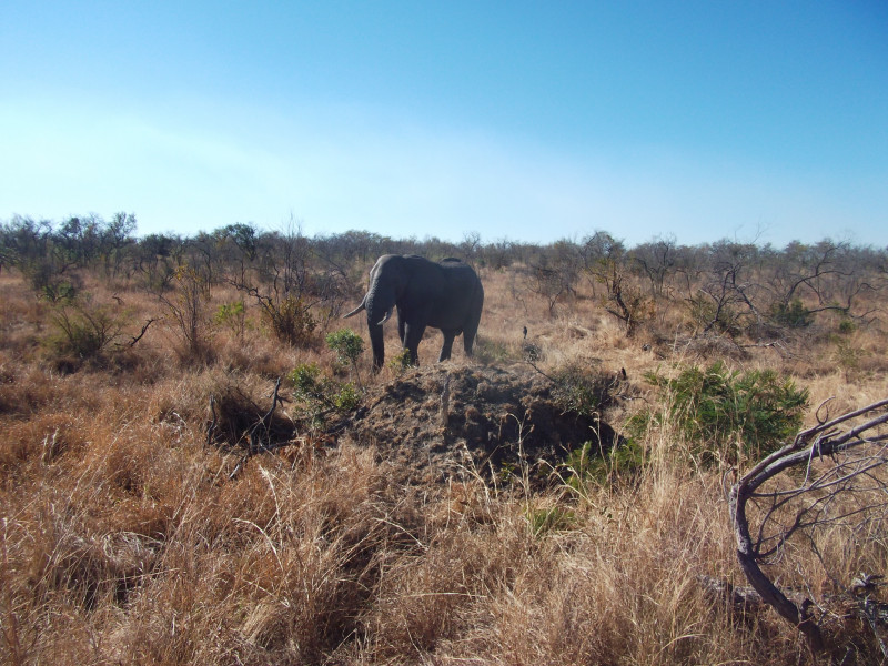 South African Wildlife | Eastern Expedition