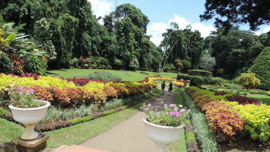 VIP Srilanka Highlights - 7 Days