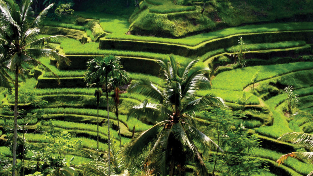 4 Days Bali Nature and Adventure Tour
