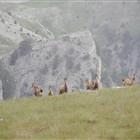 Zagoria Smooth Hiking Exploration - Trekking In Greece (5 Days)