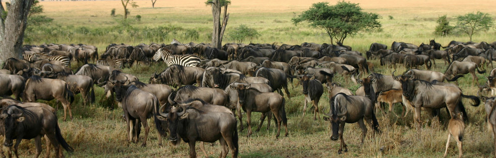Central Serengeti via Olduvai Gorge