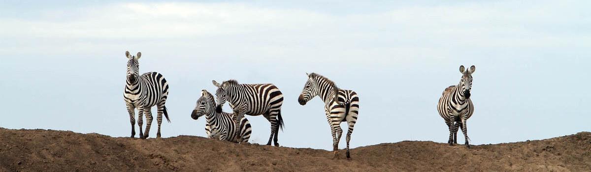 Central to Northeastern Serengeti