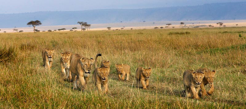 Northeastern to Northern Serengeti: Grea