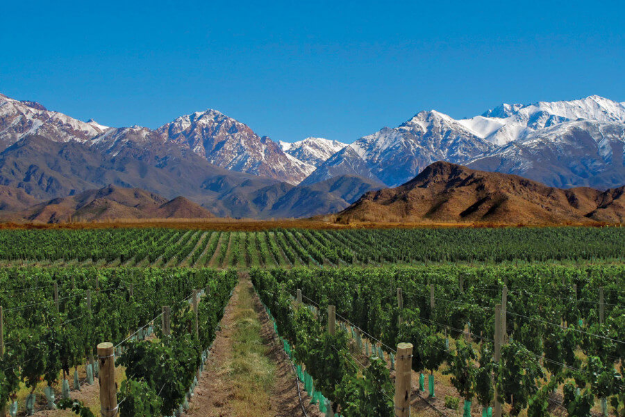 Visit to wineries - Mendoza