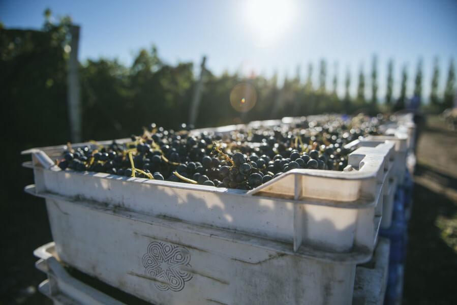 Nature & Wine
