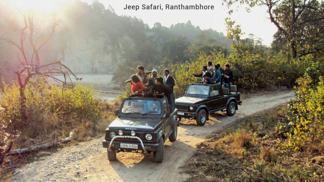 Golden Triangle with Jungle safari tour
